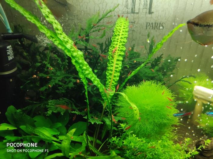 Мой аквариум 3 года стабильности Аквариум, Аквариумные рыбки