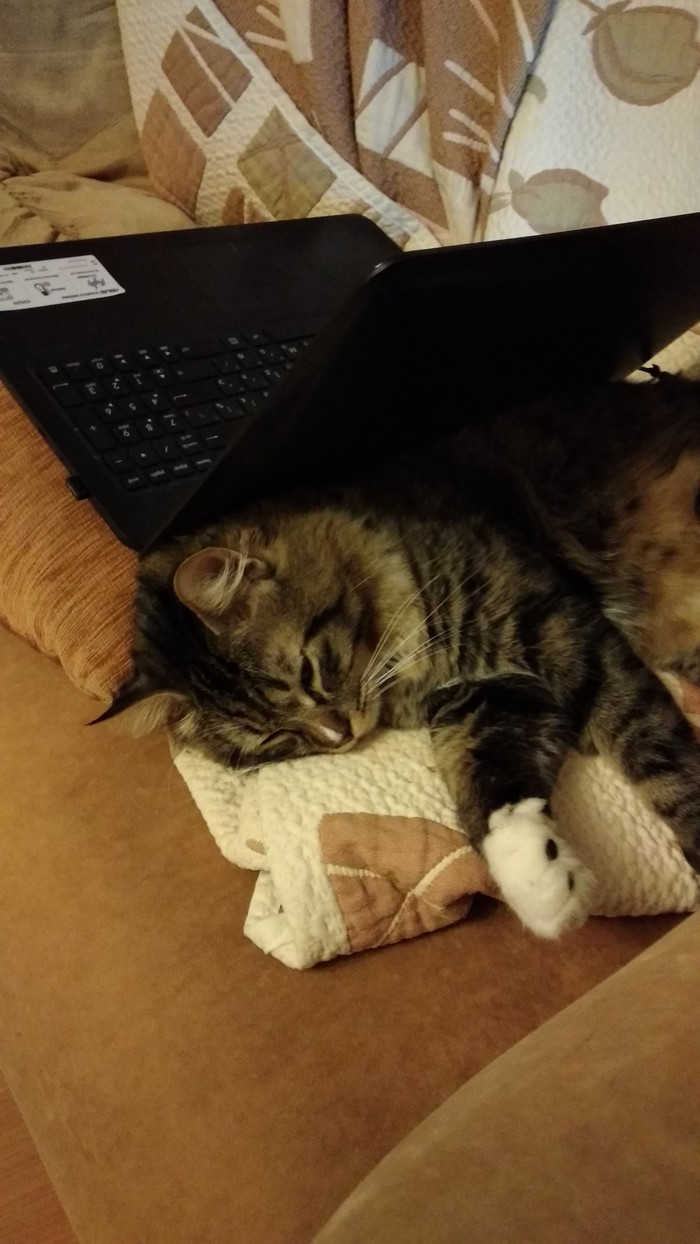 Бонд,просто кот Кот, Фото на тапок, Длиннопост