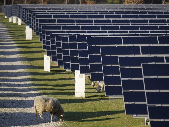 Солнечная панель и овцы Экология, Солнечная энергия, Овцы, Симбиоз, Экосфера, Длиннопост, Солнечная Электростанция, Электростанция