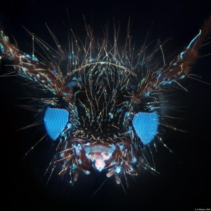 Неизвестное насекомое. Микроскоп, Что это?
