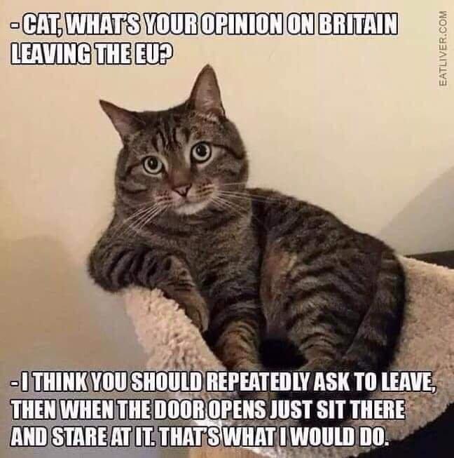 Делай как кот Кот, Политика, Великобритания, Brexit