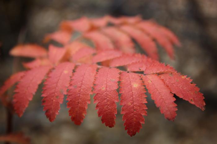 Лаконичная красота осенней природы Осень, Природа, Canon EOS 100d, Макросъемка, Начинающий фотограф, Хочу критики, Длиннопост, Фотография