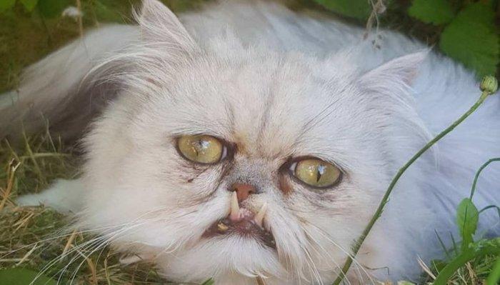 Странный котик Уилфред Кот, Странный-Кот, Котомафия, Длиннопост