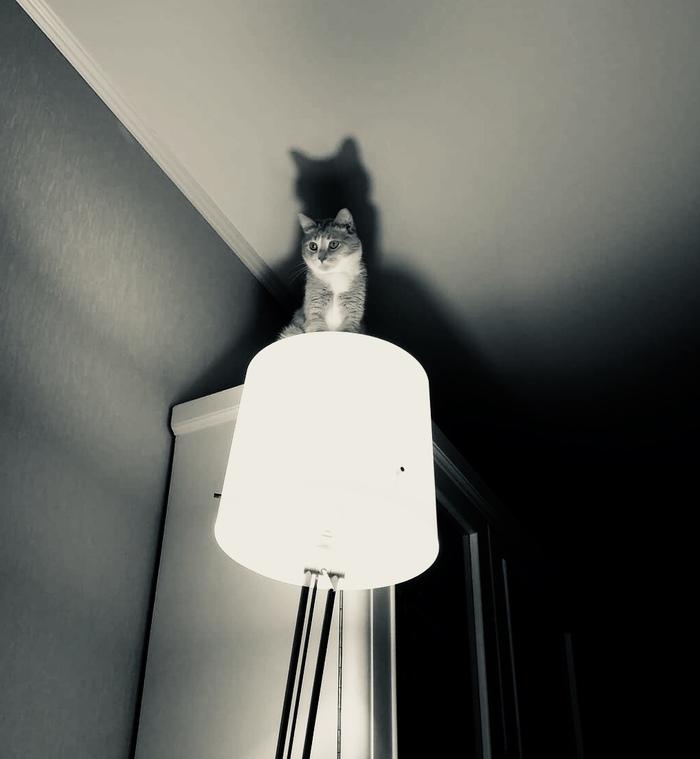 Еще один кот с лампой. Криповатый... Кот, Кот с лампой, Небольшая крипота, Фотография, Черно-Белое, Черно-Белое фото