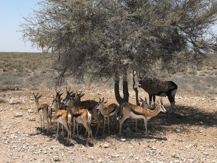 В тени Намибия, Тень, Жара, Животные