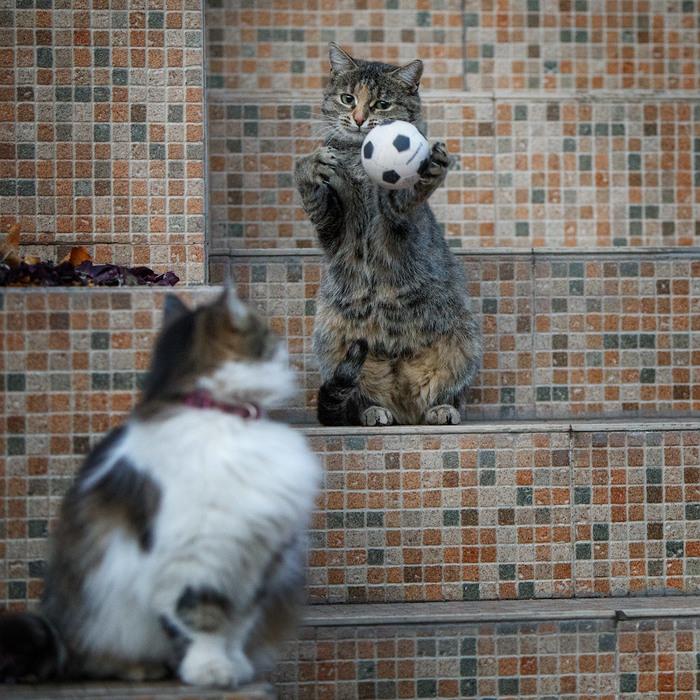 Котики и мячики Котомафия, Кот, Мяч, Фотография, ВКонтакте, Длиннопост
