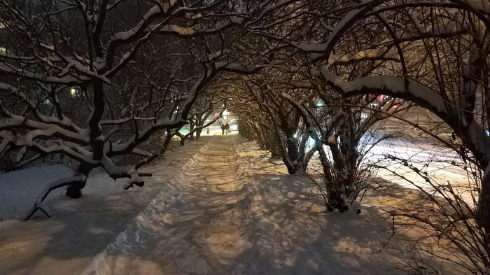Снежный вечер Фотография, Снег, Владивосток