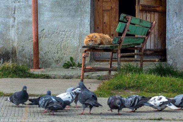 Котик, который не смог Кот, Пермь, Голубь, Длиннопост
