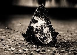 Чёрная бабочка смерти Ужасы, Страшно, Смерть, Длиннопост