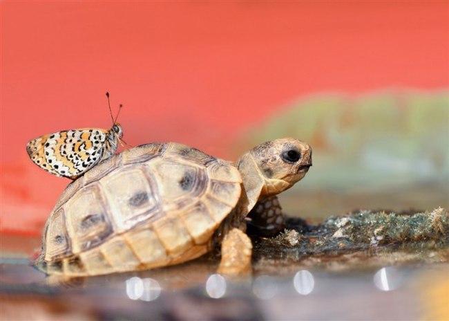 Оставьте хороший отзыв, пожалуйста Черепаха, Бабочка, Фотография