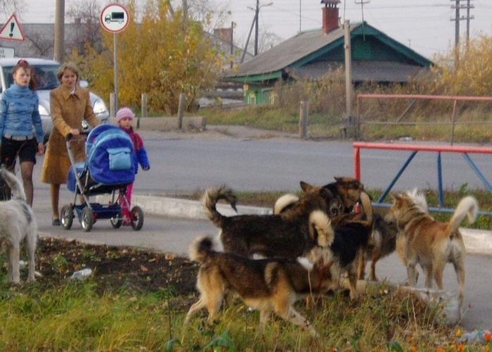 Депутаты Госдумы продвигают уЗАКОНивание стай бродячих собак на улицах! Бродячие собаки, Безнадзорные собаки, ОСВВ, Депутаты, Всё ради хайпа, Нападения бродячих собак, Законы РФ