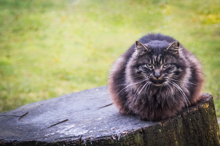 Небольшая подборка красивых уличных котов Котомафия, Кот, Фотография, Улица, Длиннопост