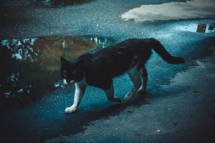 Атмосферный бродячий кот