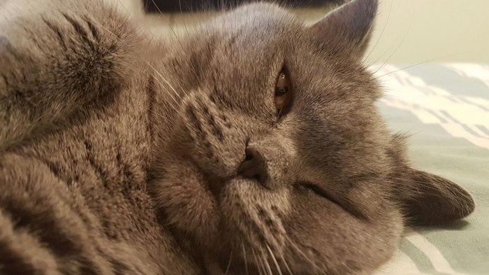 Даже во сне... Кот, Котомафия, Слежка