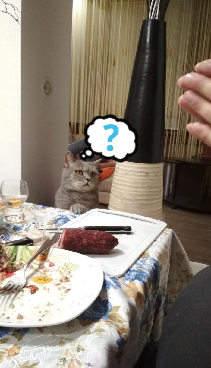 Хорошо сидим ) Кот, Котомафия, Собутыльник, Посиделки