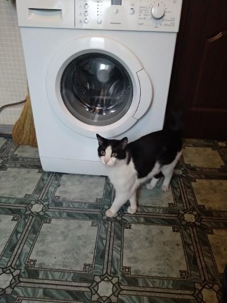 Москва. Найдена кошка/кот Кот, Длиннопост, Потерялся кот, Найдено, В добрые руки, Москва, Выхино, Помощь животным, Без рейтинга
