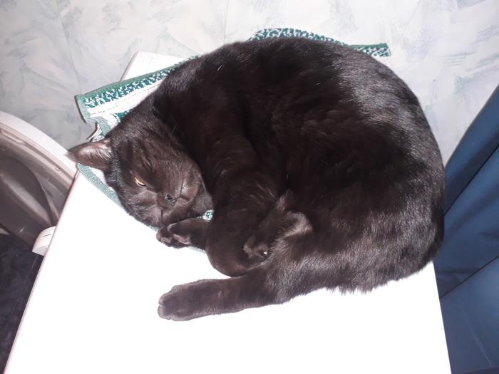 Пополнение Кот, Пополнение, Черный кот, Котомафия