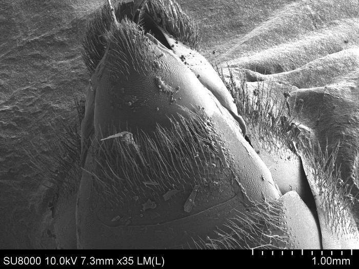 Пчела под электронным микроскопом Пчелы, Интересное, Электронный микроскоп, Наука, Фотография, Длиннопост