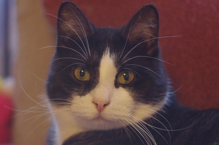 Потерялся друг в СПб Кот, Потерялся кот, Санкт-Петербург, Купчино, Без рейтинга, Помощь