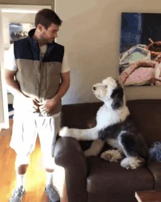 Пёсель одобряет обнову хозяина