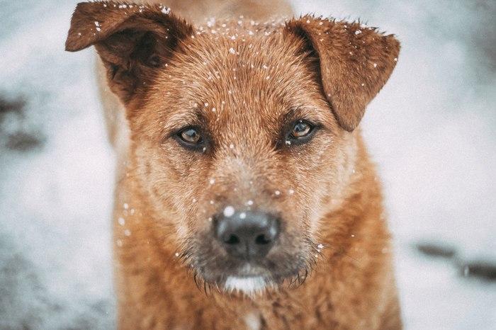 Каждый из нас предан. Кому-то или кем-то. Собака, Глаза, Взгляд в душу, Canon 600D, Советская оптика, Гелиос44м, Бездомные животные