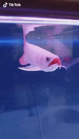 - Рыбки, с вами всё в порядке?