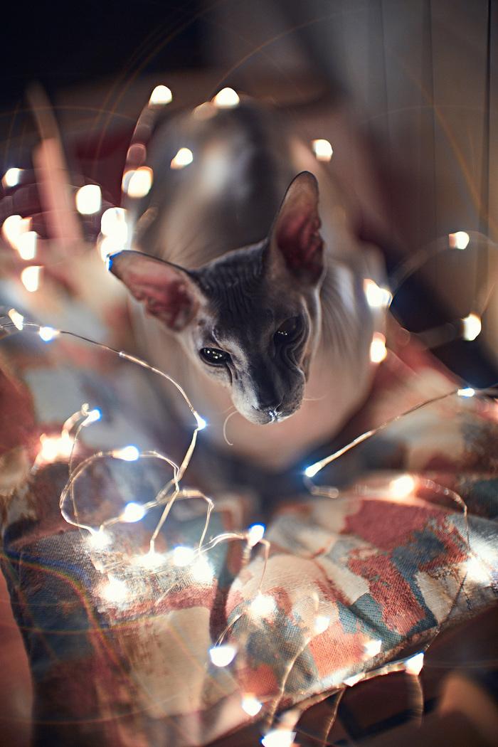 Экстремальная оптика и котики - что еще нужно фотографу? Кот, Объектив, Фотография, Длиннопост