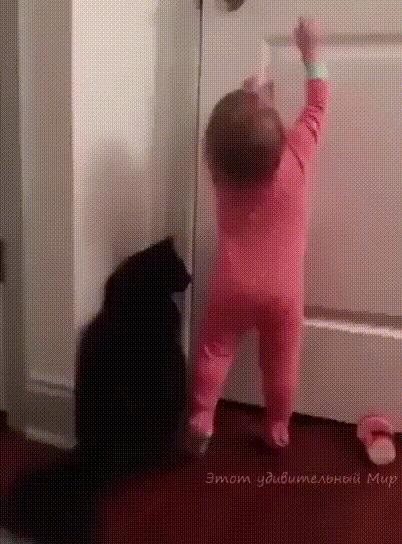 Друг всегда придет на помощь Друг, Кот, Котомафия, Гифка, Дети