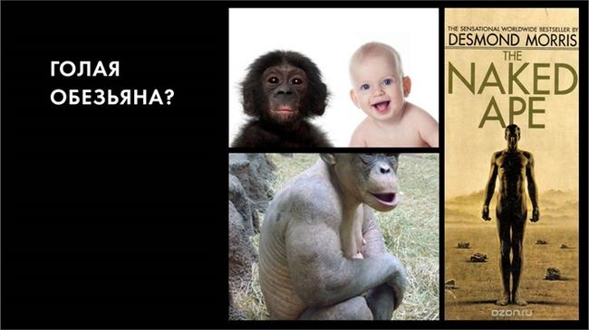 Голая обезьяна, водная обезьяна, недоразвитая обезьяна… Или куда делась наша шерсть? Часть 1 Антропогенез ру, Александр Соколов, Антропология, Обезьяна, Видео, Длиннопост