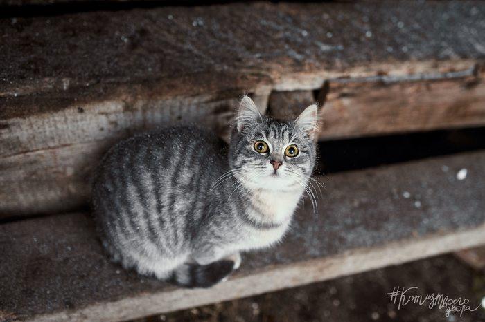 Териберская кошка Север, Териберка, Кот, Фотография, Фотограф, Зима, Село, Мурманская область