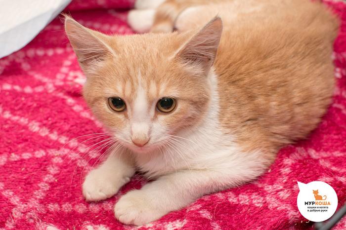 Ночами Лакомке снится мама... Кот, Приют для животных, Трогательно, Муркоша, В добрые руки, Помощь животным, Длиннопост, Без рейтинга