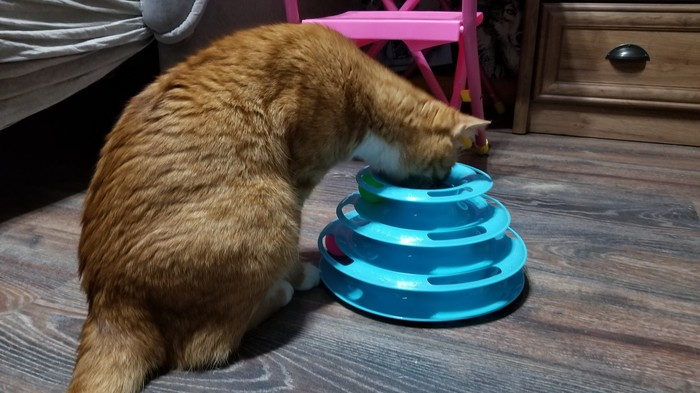Играл с пирамидкой. Проиграл Кот, Потрачено, Котомафия