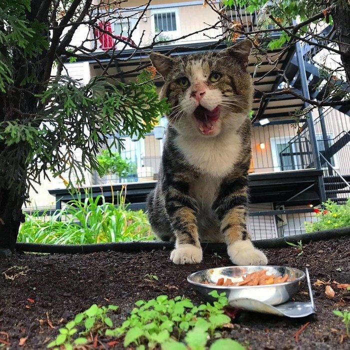 История кота Паду Кот, Канада, Длиннопост