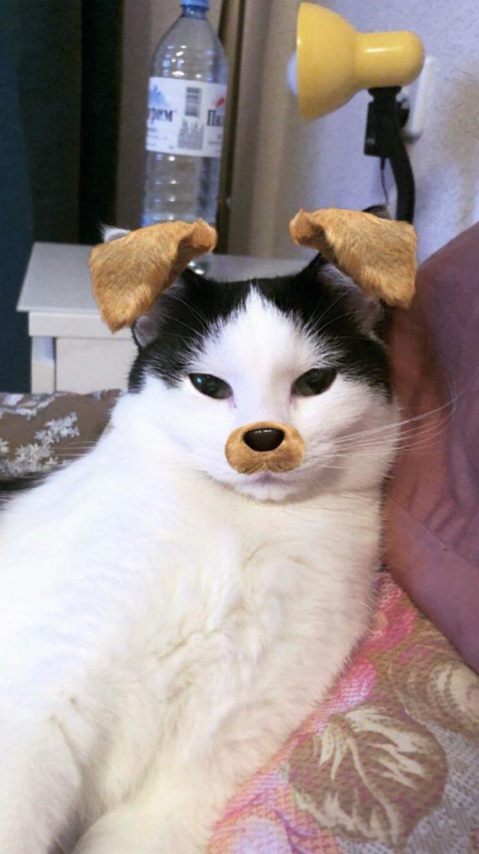 Забавно Кот, Обработка фотографий, Длиннопост