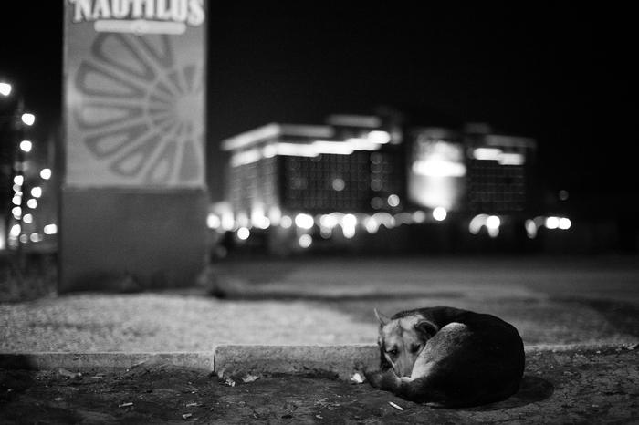 Чужой на этом празднике жизни Собака, Огни, Тоска одиночество
