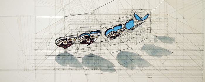 Золотое сечение от архитектора Rafael Araujo Арт, Золотое сечение, Раскраска, Морская ракушка, Рисунок, Длиннопост