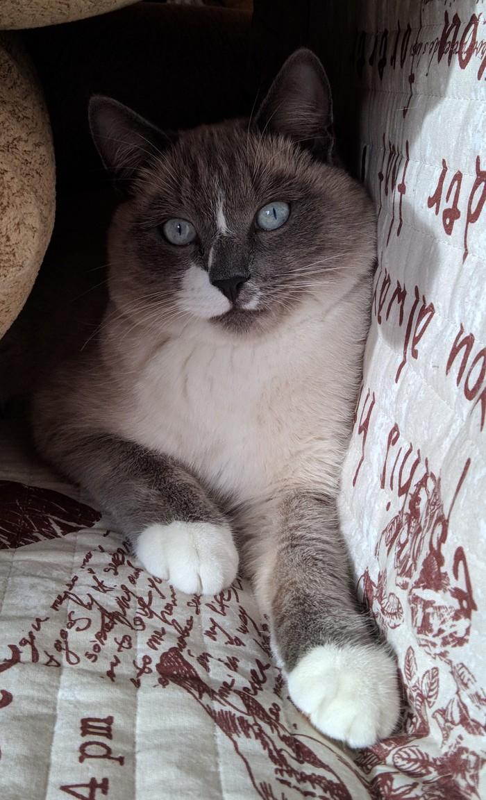 Присоединяюсь ко всем.С днем домашних животных! Это Кокос и он неадекват. Кот, Домашние животные, Кокос, Длиннопост