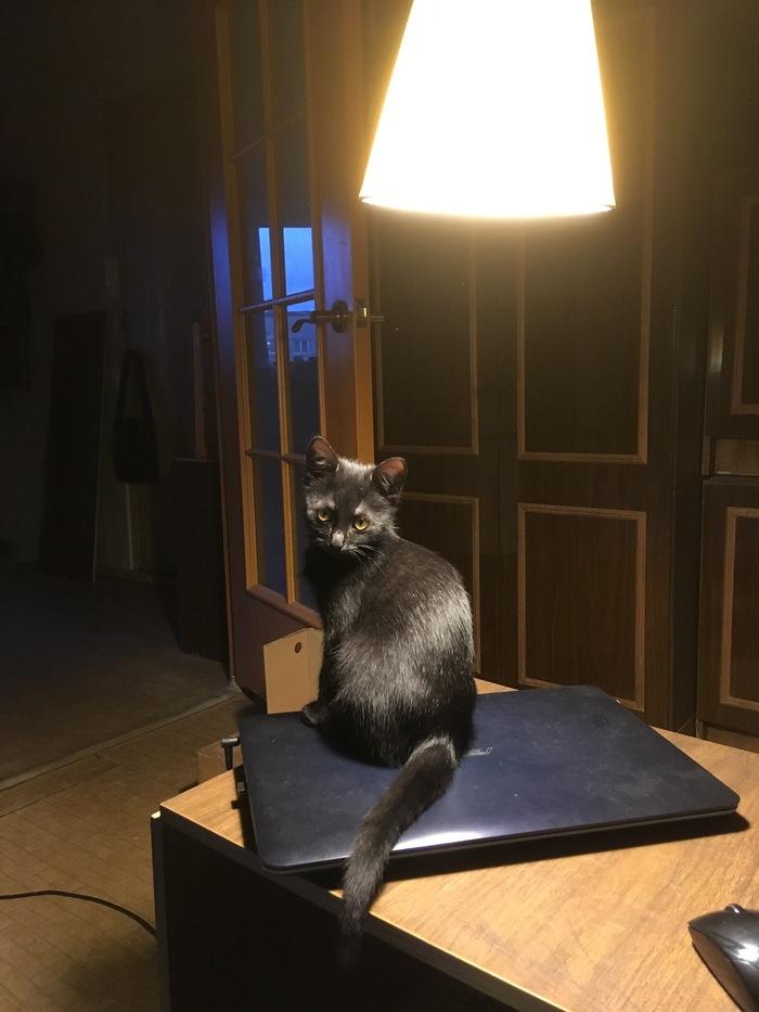 В честь дня домашнего животного позволю вам смотреть на свою киску. Котомафия, Кошка-Бегемошка, Длиннопост, Кот, Домашние животные