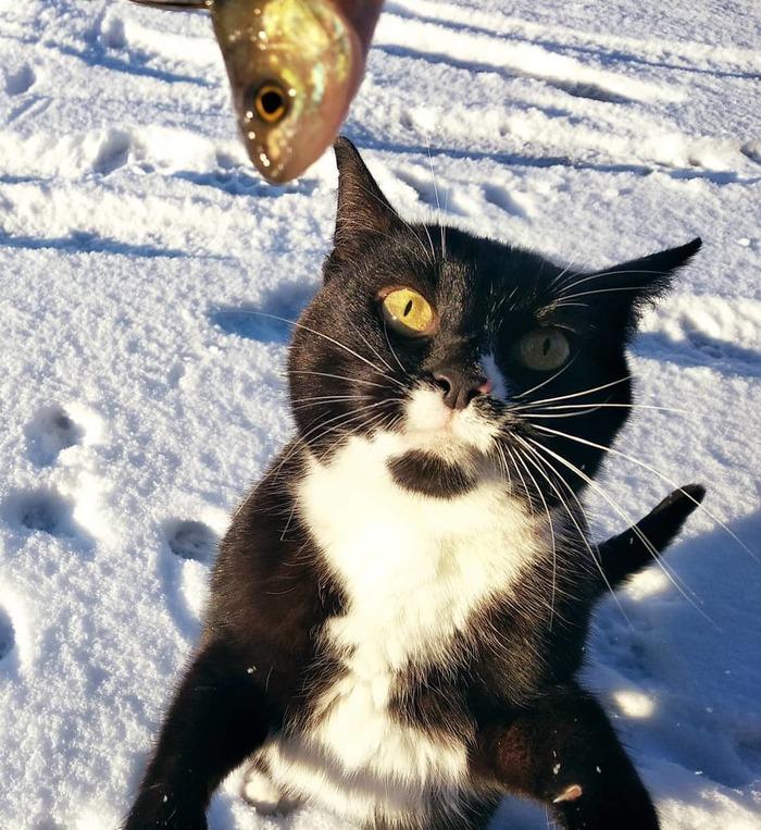 Эй, рыбачок..рыбу давай! Кот, Рыба, Подледная рыбалка, Рыбалка