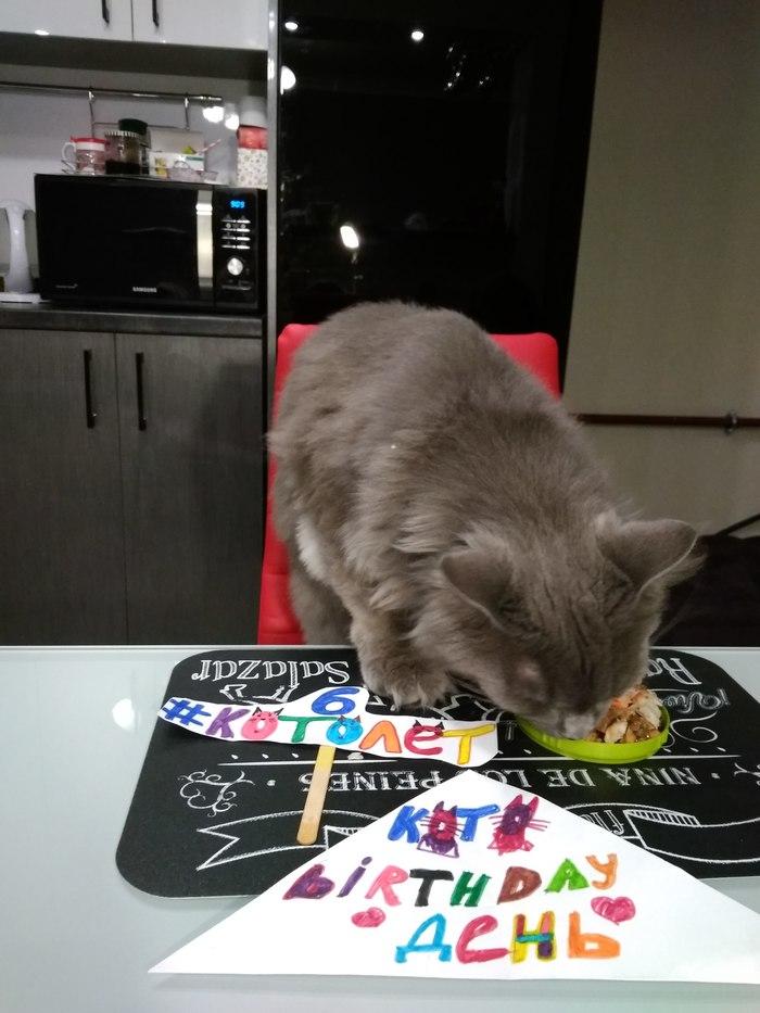 Кото Birthday день Кот, Котомафия, Котопес, День рождения, Длиннопост