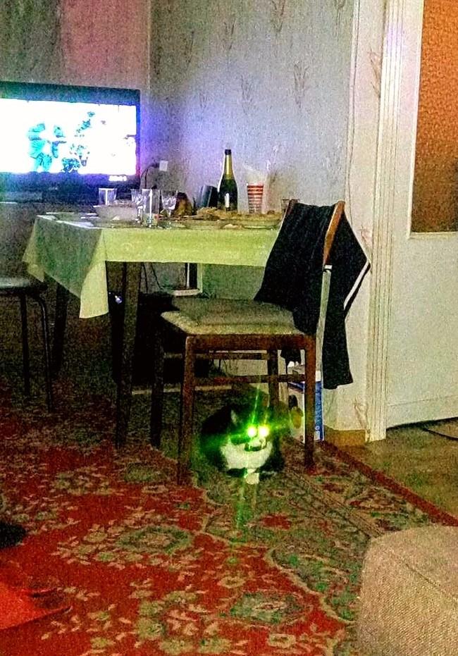 Внезапно... Кот, Страх, Глаза