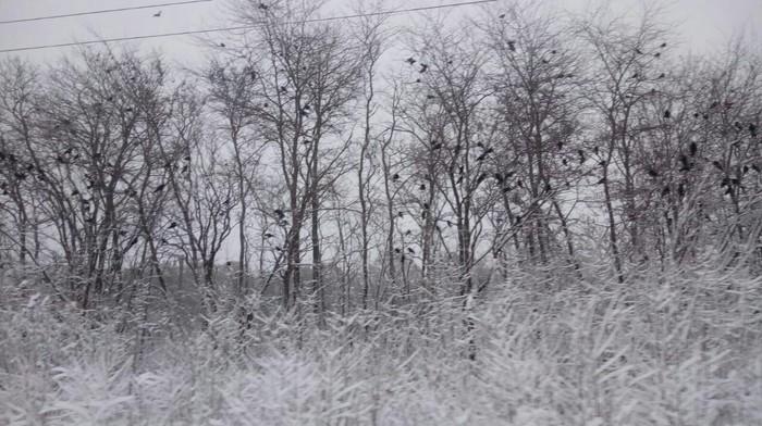 Снежный плен на дороге... Дураки и дороги, Метель, Снег, Авария, Бесит, Длиннопост