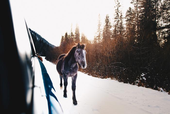 Не Алтай, а Хакасия Хакасия, Абакан, Она, Большой он, Длиннопост, Canon, Фотография, Лошадь