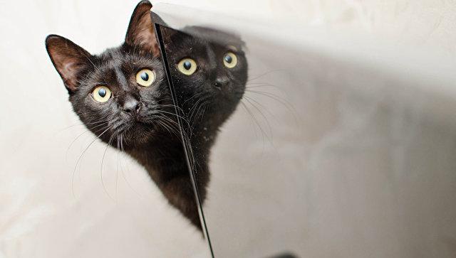 Милонов предложил законодательно запретить наказывать котов Россия, Депутаты, Милонов, Кот, Запрет, Законодательная инициатива, Политика