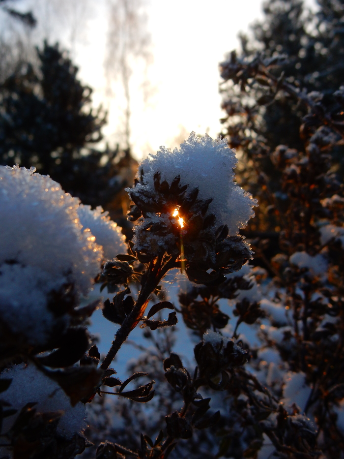 Первый день зимы Начинающий фотограф, Утро, Зима, Природа, Длиннопост, Фотография, Кот