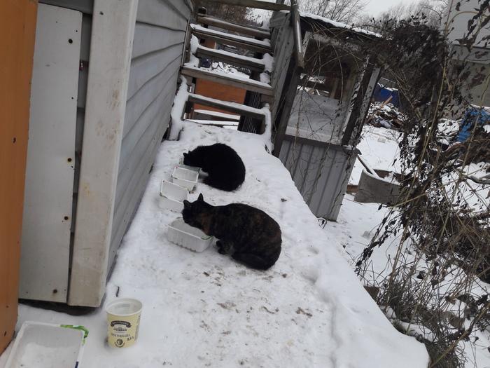 Кошки - выживание зимой. Кот, Выживание, Зима, Холод, Уличные, Животные, Длиннопост