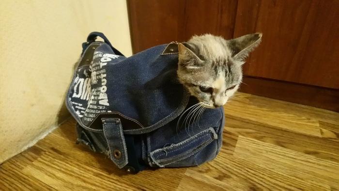 Нашел дохлую (нет) кошку 3 Сушка, Длиннопост, Видео, Выживание, Кот, Спасение животных