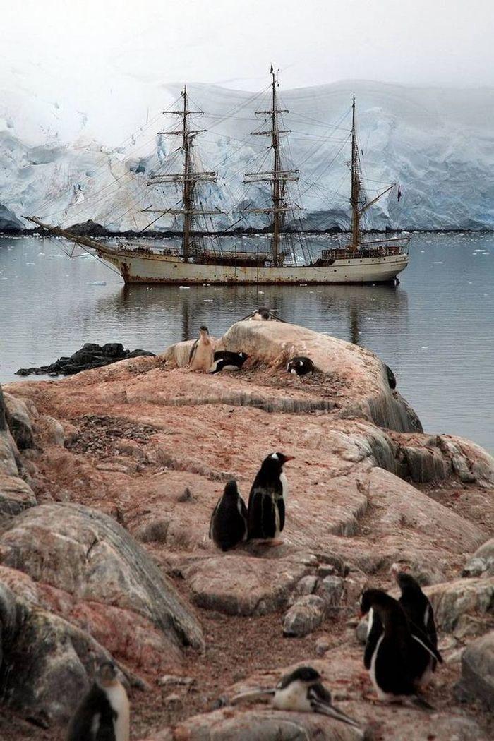 Антарктида : далекая, загадочная, удивительная Путешествия, Антарктида, Научные исследования, Факты, Природа, Пингвины, Длиннопост