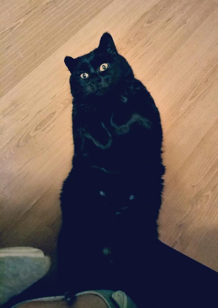 Просто Вася. Просто кот. Кот, Котомафия, Черный кот, Приют для животных, Длиннопост