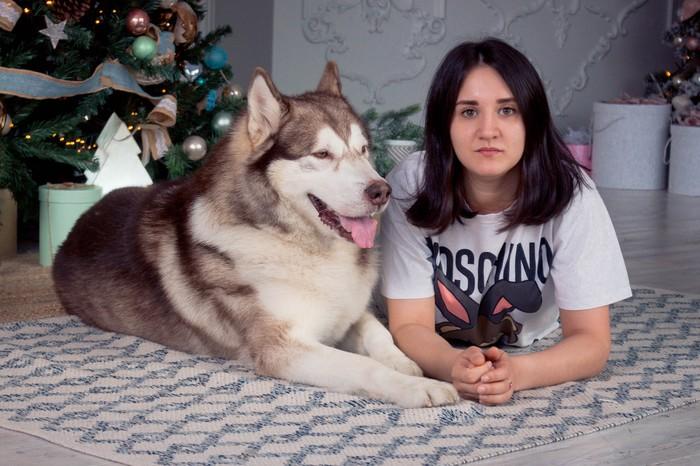 Просто Новогодний песель :) Аляскинский маламут, Новый Год, Фотосессия животных, Фотография, Собаки и люди